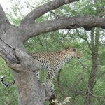 #5 of the Big Five