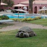 Juanita la tortuga en los jardines del Hotel