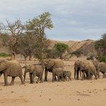 Elephants on the elephant tracking excursion