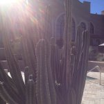 looking at back of hotel thru cactus