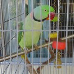 Leur perroquet