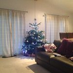 our lovely Christmas tree