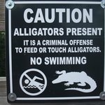 Turtles and humans beware