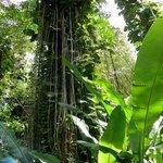 Visite du Jardin Botanique