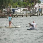 Paddleboarders with their dolphindog!