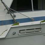 2 Iguanas on the boat across the canal