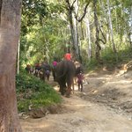 Elephants and mahouts returning from their bath
