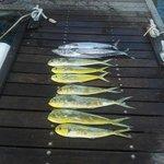Mahi Mahi Fishing Tours - Private Charters