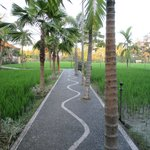 Paddy fields view at back of restaurant