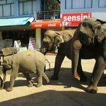 elefanti al trotto verso il bagno al fiume
