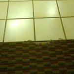Carpet way past expiration date.