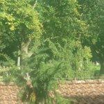 Вид из окна отеля на кладбище