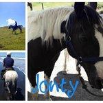 Jonty the horse