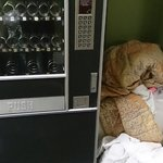 The snack vending machine and the clean sheets on the floor
