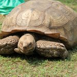 We were lucky enough to see the Tortoise on this visit