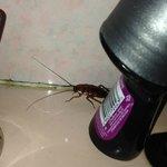 Bathroom visitor