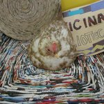 Very sweet chicken who made a home in Mariposa's giftshop area.  She is lovely!