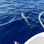 Spinner Dolphins right on the bow!