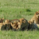 masai mara north conservatory