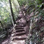Jungle trail between camp and resort