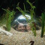The seahorse aquarium
