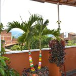 colorful palm tree on the terrace