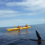 Kaikoura kayaks with our 2 year old.