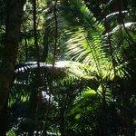 Rain Forest Fraser Island