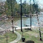 Spring on Lake Oconee