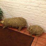 Свинки при входе