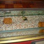 il piccolo acquario all'ingresso