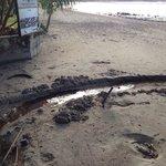 Scarico delle fogne davanti alla spiaggia dell albergo(((