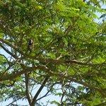 Kingfisher on tree near tee-off box