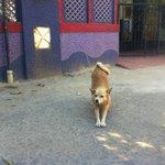 family dog (not wild) outsid main gate