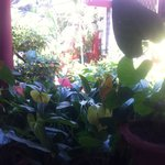 lushious garden