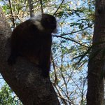 Un makako libero nella foresta