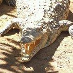 Un coccodrillo della riserva naturale
