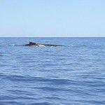 L'avvistamento delle balene