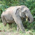 слоник ест фрукты