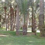 gigantischer Palmengarten