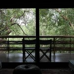 Jungle view from our bed