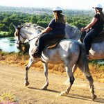 SunShine & DayDreams - Private Horseback Riding
