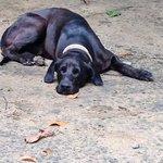 Maki, Haushund