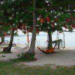 hammocks for a nice nap