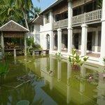 Le bassin aux lotus