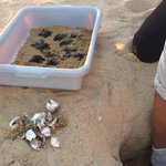turtles just hatched!  incredible!!!!