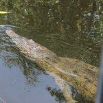 crocodile tour