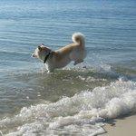Jack loving the sea