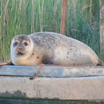 Seal River Frome - Wareham Boat Hire