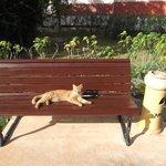 Ginger the cuban cat